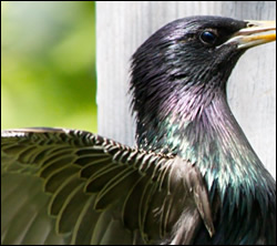 bird removal New Braunfels