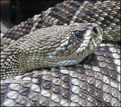 snake removal New Braunfels
